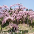 Koriyama Tourism Association – GV