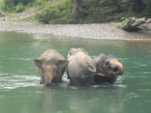 Orangutan & Elephant Trek with Camping