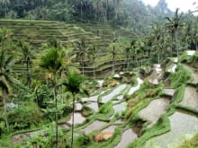 Visit Volcano, Ubud rice terrace and  Art Villages