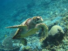 Private Snorkeling Trip on Gili Islands to see the Turtles