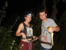See Wild Snakes in the Jungles at Night