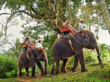 Elephant Trekking @ Bali Elephant Camp