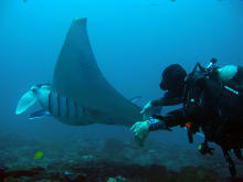 Swim with Manta Rays  & Snorkel Safari (1 day)