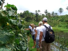 Spend a Day at a Secluded Organic Farm in a Balinese Village
