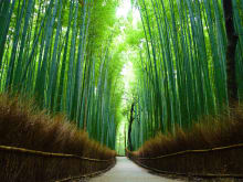Enjoy Private tour to Kyoto Arashiyama Bamboo and Tenryuji