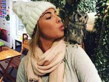 Play with real owls at an owl cafe, Ueno, Tokyo