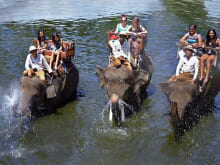 Elephant Trek + Rafting / Cycling / Trekking / Horse Riding