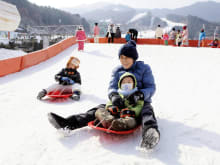 Jisan Resort 1-Day Ski / Snowboard Tour from Seoul