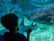 45% OFF SEA LIFE Bangkok Ocean World Tickets