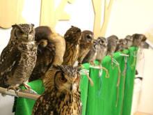 "Reservation for Lovely Owl Cafe ""Fukuro no Mise"" in Fukuoka"