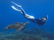 Snorkel with Sea Turtles – or at Night! – in Hachijojima