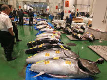 Private Tuna Auction and Toyosu Market Tour