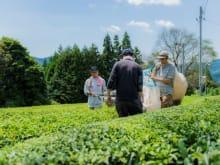 Visit an Organic Tea Farm in Japan (3-hour tour)