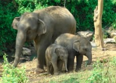 Camp, trek and enjoy Thailand's beauty with elephants
