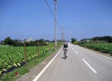 Cycling Okinawa