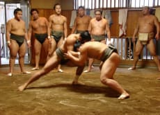 Watch Morning Sumo Training at Sumo Stable in Tokyo!