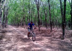 Take a half-day bike tour to the historic Cu Chi Tunnels