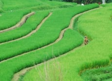 Marvel at the most Stunning Rice Fields in Bali