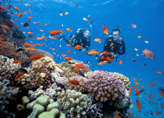 Try Scuba Diving For the First Time
