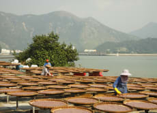 Explore Tai O Fishing Village, its Temples & Streetlife