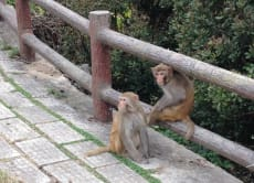 Discover Hong Kong's Hidden Monkey Mountain!