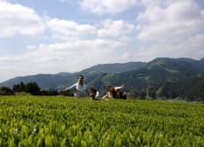 Stay in the Land of Organic Tea and Learn Tea Culture