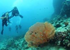 Discover Scuba Diving in Koh Phi Phi