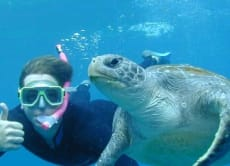 Snorkel and See Sea Turtles & Sharks in Phi Phi