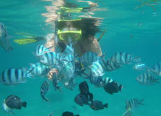 Snorkel Through Colorful Fish & Corals in Bali