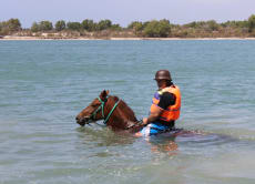 Go Horse Riding into the Sea and Swim with the horses