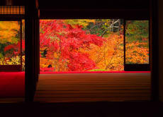 Be Amazed, Enjoy the Red Leaves of Kyoto!