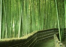 Experience Arashiyama!