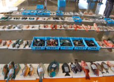 Watch Fish Auction and Make Sushi in Nago, Okinawa