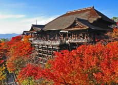 Take a half-day walking tour around Gion and Kiyomizu, Kyoto