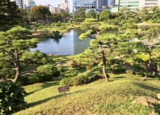 Stroll a beautiful Japanese garden and taste sake in Tokyo