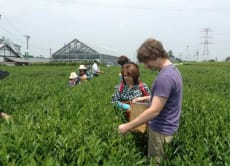 Enjoy a Special Green Tea Tour in Makinohara, Shizuoka
