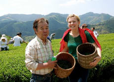 Visit an Organic Tea Farm in Japan (3-hour tour)
