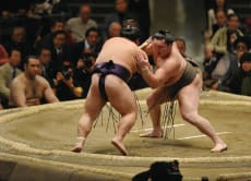 Attend Nagoya's Sumo Tournament with a guide