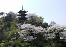 Visit Sankeien Garden in Yokohama