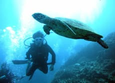 Dive around Kerama Islands in Okinawa for a Whole Day