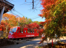 Visit a dignified shrine and explore Mt Tsukuba