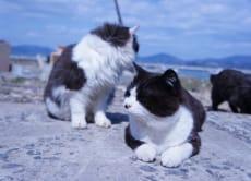 "Tour to the ""Cat Island"" Tashirojima & Matsushima, Miyagi"