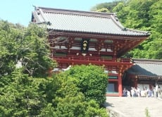 Take a Kamakura history and nature tour in English