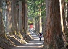 1-Day Togakushi Nature Beauty, Shintoism & Ninja Experience