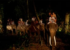 25% OFF Safari Under the Stars with Taro Elephant Park Bali