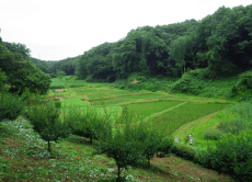 Hike and Explore Japan's Nature Trails near Tokyo