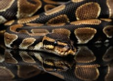 """Try the first """"Snake Café"""" in Japan at Tokyo Snake Center!"""