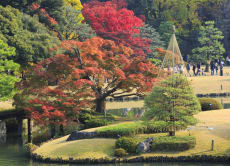 1 Day Autumn Leaf Hunting Walking Tour in Tokyo!