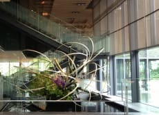Appreciate Ikebana and Hidden View Points in Tokyo