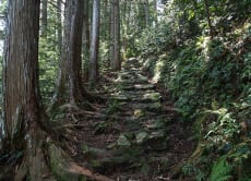 Join the Kumano World Heritage Tour (3-nights, 4-days)